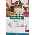 Advantage 250 4 Pipetas para perros 10 a 25 Kg.