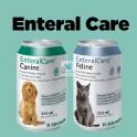 BRAUN ENTERALCARE FELINE 6 x 325 ml Dieta Líquida Completa para Gatos