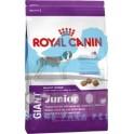 Royal Canin Junior Giant Dog 15 kg pienso para perros