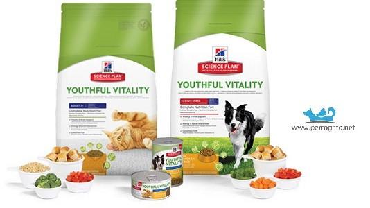 Hill´s Senior Canine Youthful Vitality