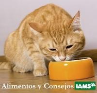 """Consejos alimenticios ¿Su gato es """"realmente difícil""""?"""