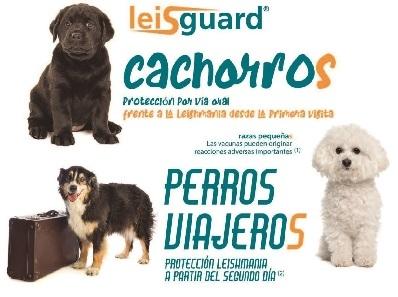 LEISHMANIOSIS, TIEMPO DE PROTEGER SU PERRO