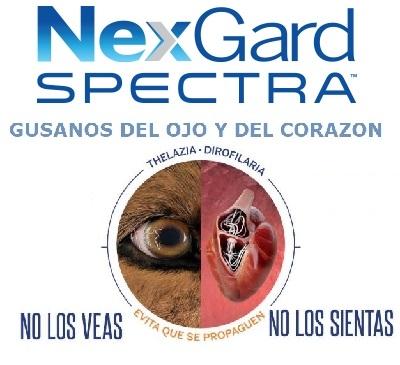 NEXGARD SPECTRA ® ANTIPARASITARIO INTERNO Y EXTERNO PARA PERROS
