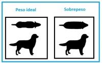 Peso ideal Perros razas pequeñas: su salud está en nuestra mano